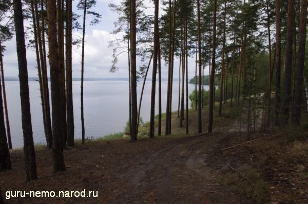 Сосновый лес на берегу